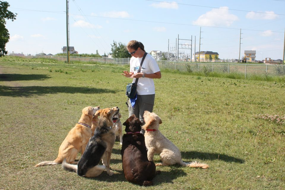 Dog Park 6