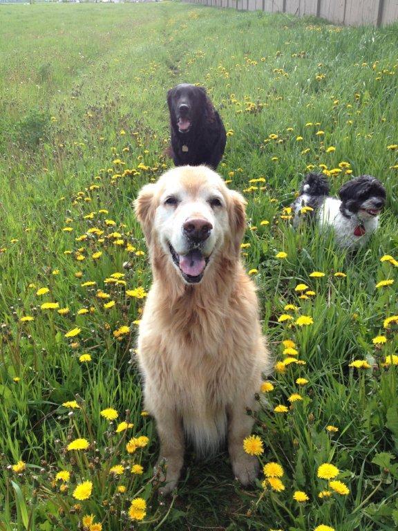 Jasper, Scout, Thunder