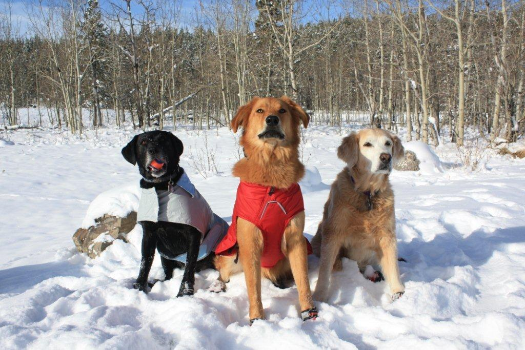 Our own 3 dogs