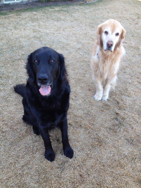 Scout & Jasper