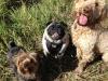 Stewie, Tito, Rocky
