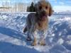 snowy Rocky