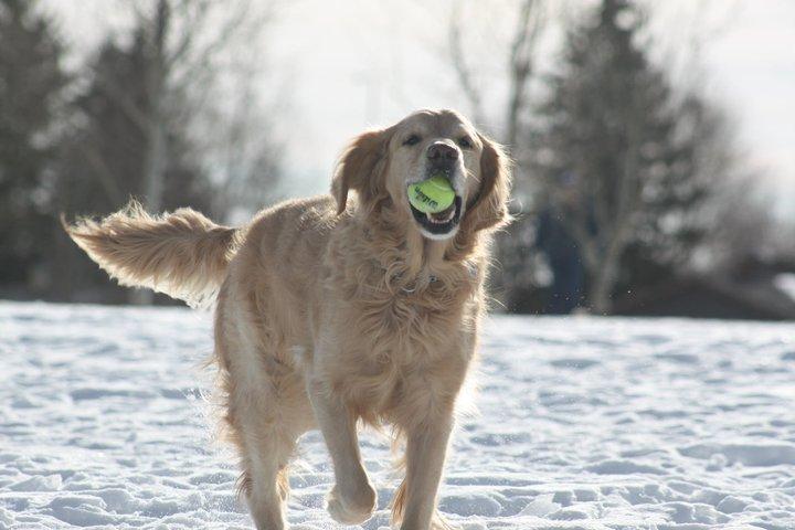 playing-ball